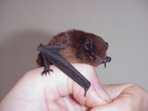 No bats in your belfry? Try your back yard!