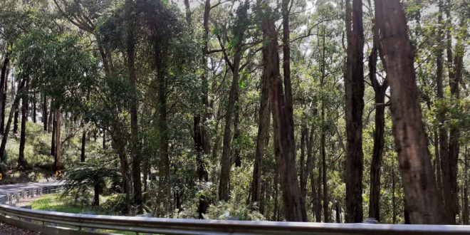 The road to Olinda winds its way pleasantly through the forests of the Dandenong Range.